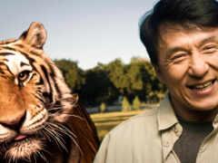 тигр, спина, джек