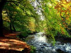 природа, scene, ручей