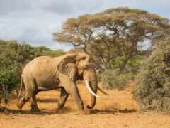 state, слон, washington