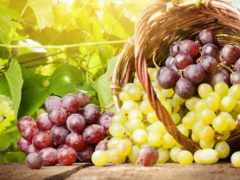 виноград, винограда, ягоды