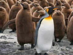 пингвин, shortcut, клавиатура