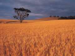 landscape, урожай, лидер