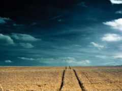plain, небо, поле