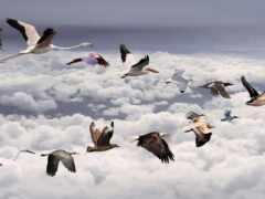 птица, dream, овцы