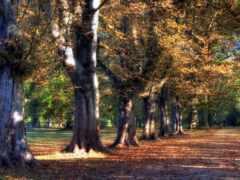 зелёный, дерево, sonbahar