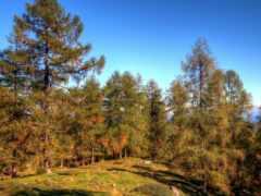 дерево, лес, fore