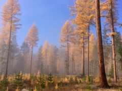 лес, prehistoric, дерево