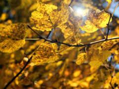 осень, лист, yellow