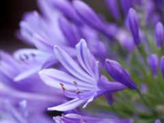 color, берет, violeta