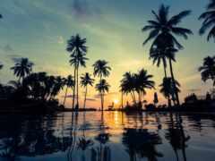 palm, million, фото
