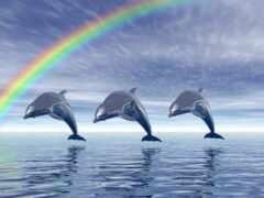 дельфин, see