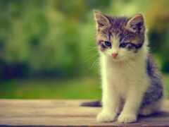 котенок, cute