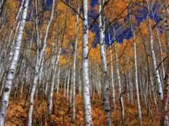 grove, осень, природа