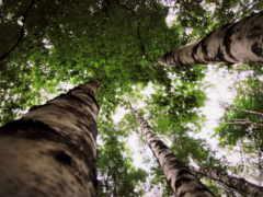 природа, краю, берёзовом