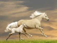 лошадь, жеребенок, funart