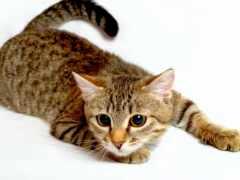 кот, качества, aliexpress