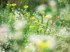 cvety, полевые, красивые Фон № 78723 разрешение 1600x1200