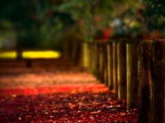 red, учиха, природа