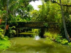 пруд, трава, park