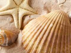 seashell, marine, dream