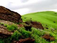 rumput, padang, hijau