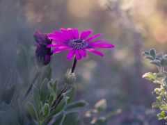 красивые, нежные, cvety