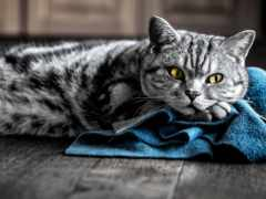кот, striped, серый