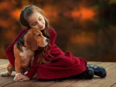 собака, девушка, animal