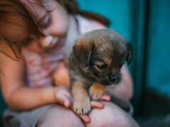 собака, девушка, ребенок