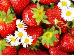 клубника, ягода, summer