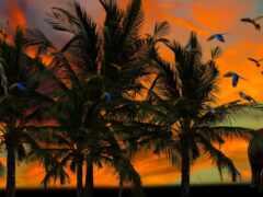 африка, palm, дерево