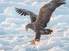 орлан, animal, gambar
