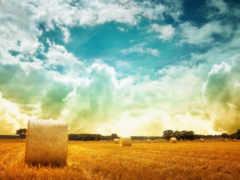 field, hay