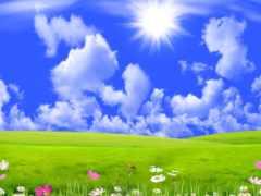 sun, луг, трава