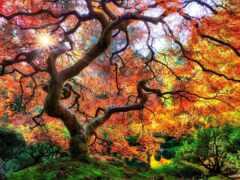 дерево, красивый, миро