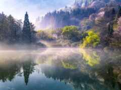 весна, природа, туман