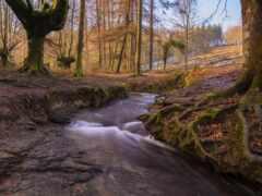 река, природа, дерево