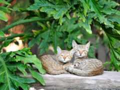 коты, steam, лист