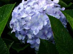 hoa, cựu, cảm