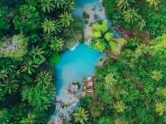 пальмы, philippines, naturaleza