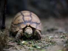 черепаха, природа, animal