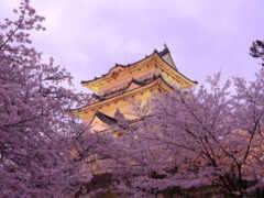 japanese, япония, весна