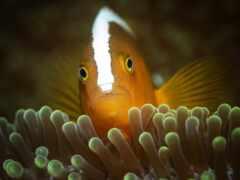 fish, водой, море