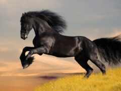 mustang, лошадь, wild