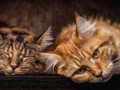 кот, photos, cats