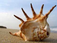 ракушки, seashell, красивые