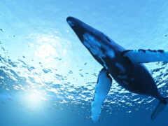 кит, animal, биг