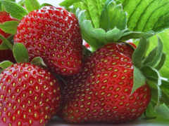summer, клубника, ягода
