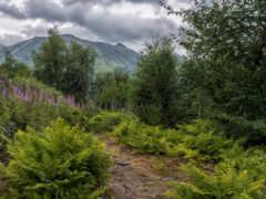 chugach, аляска, гора