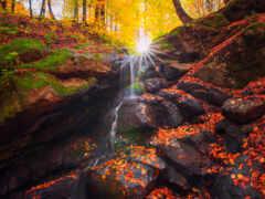 лес, дерево, природа